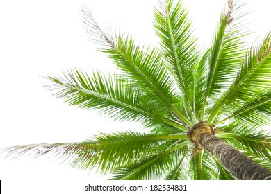 Under coconut tree on the white background.