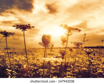 Under the evening sun, abstract natural backgrounds with wild flowers