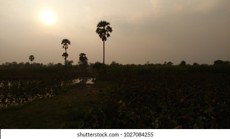 Under the Evening Sun, Yellow, Thai Countryside, Natural