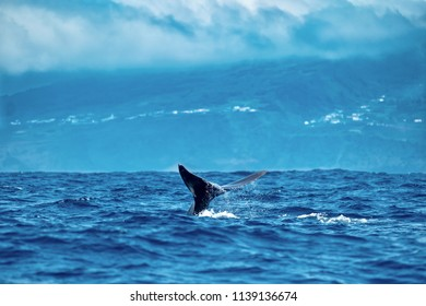 Under heavy clouds near the coast of Pico Island, a sperm whale shows its tail flukes