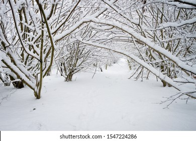 Under a heavy snowfall a woodland walk is gripped in winter's icy embrace. The overhanging branches have created a beautiful snow covered tunnel through which to walk.