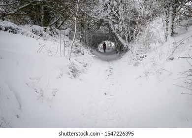 Under a heavy snowfall a woodland walk is gripped in winter's icy embrace. A walker is silhouetted in a beautiful snow covered tunnel.