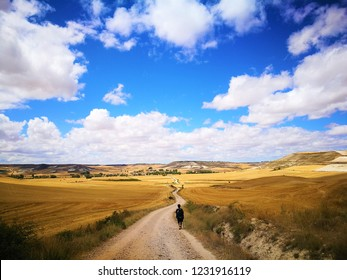 Under the horizontal skyline of Camino de Santiago, a pilgrim walks lonely between autumn golden fields.