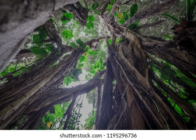 under jungle tree in  rainforest / tropical forest   -