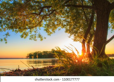 Under large tree on lake shore on sunset in summer. Summer landscape of nature. Big branchy tree on river bank in evening with clear sky on horizon. Warm sunlight on grass. Bright sun shining