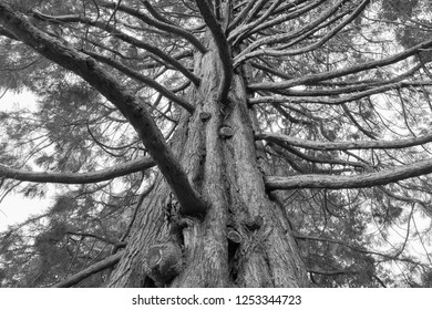 Under Oak tree black and white tone