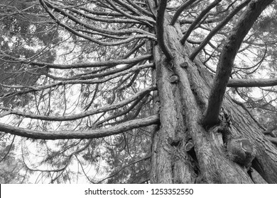 Under oak tree black and white tone, natural abstract background