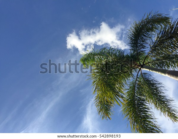 Under a palm tree and blue sky