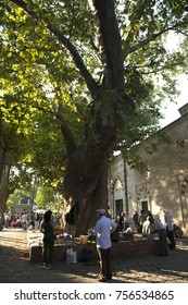 Under the plane tree, Cinaralti ;antiquities in the historic square set the market./Beyazit,Istanbul,Turkey,September 2016