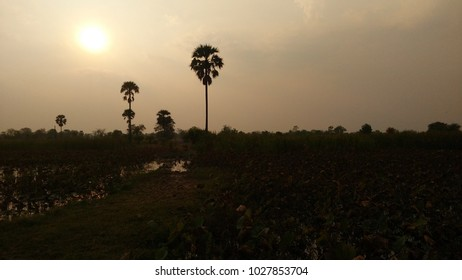 Under the sunlight , Rural, nature, evening