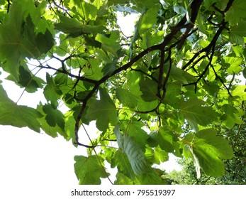 Under the tree canopy