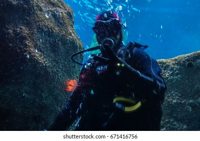 Under water creatures.  Picture taken under water.  They look like fantasy or science fiction beings.  Somehow not real.