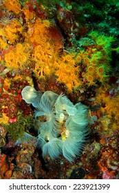 under water nature