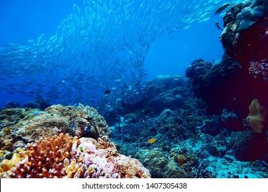 under water ocean / landscape underwater world, scene blue idyll nature