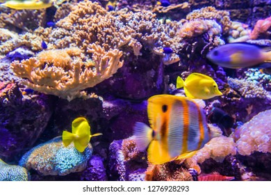 under water photograph as nature background