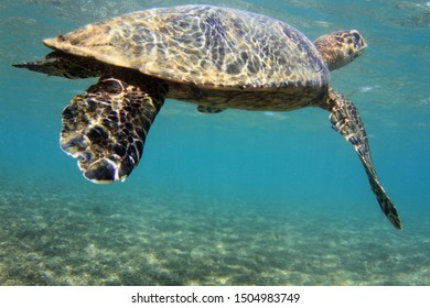 Under Water Photography with amazing capture of a big turtle with smoth moviment