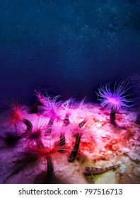 Under water world with sea anemones and Goby fish.