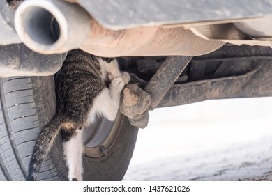 under the wheel car cat ,in the wheel car cat ,dangerous for cats ,caution