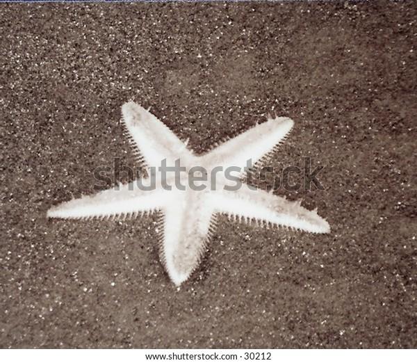 underbelly of seastar