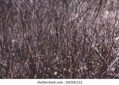 Underbrush in the Pennsylvania woods.