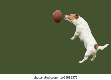 Underdog team strives to win concept with funny jumping dog catching ball for American football
