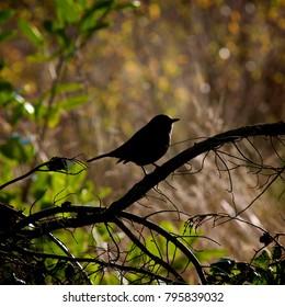 Underexposed bird on a branch