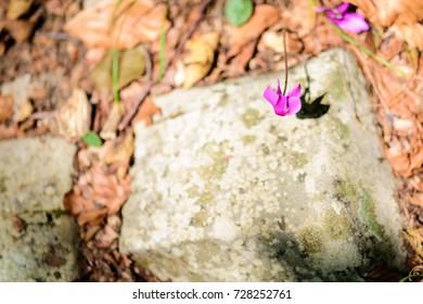 Undergrowth flowers