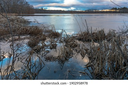 Undergrowth in the partially froze lake