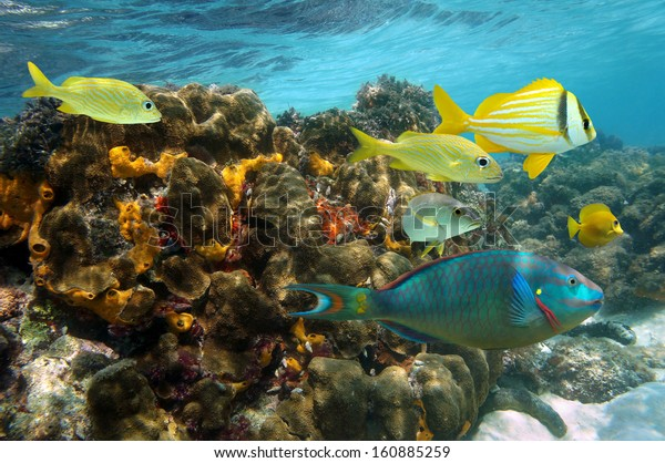 Undersea colors in a coral reef with colorful fish, Caribbean sea, Jamaica
