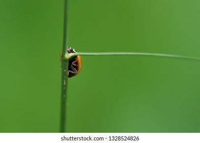 Green Underside Images Stock Photos Vectors Shutterstock