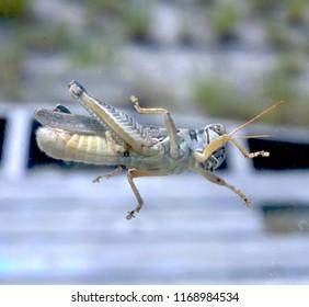 Underside of grasshopper