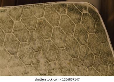 The underside of a mattress covered in mold.