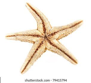 Underside of Starfish isolated on white background.