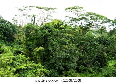the understory of the forest