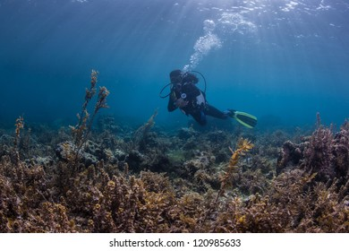 underwater activity on a healthy reef