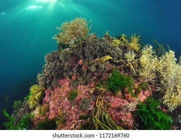 Underwater Atlantic landscape