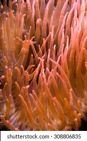 Underwater background coral pattern with red orange colours