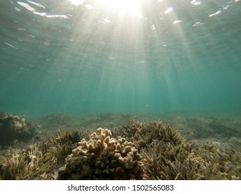 Underwater background of ocean and free space for your decoration.