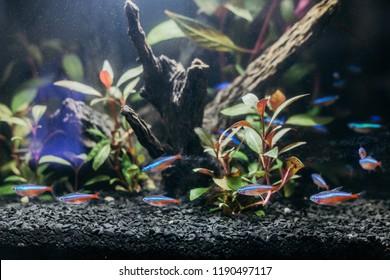 Amazon Biotope Images Stock Photos Vectors Shutterstock