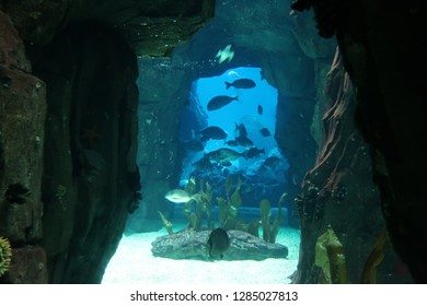 Underwater cave with fish