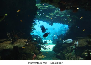 Underwater Cave and fish