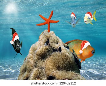 Underwater Christmas scene with funny tropical fish in red Santa Claus hat and a starfish on top of a pile of sea anemone