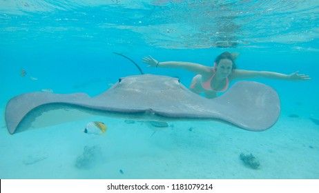 Sharks And Rays Images, Stock Photos & Vectors   Shutterstock
