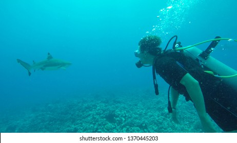 UNDERWATER, CLOSE UP: Young man diving in the Pacific meets an adult blacktip shark. Cool shot of a curious tourist exploring the stunning calm tropical sea and seeing a big shark for the first time.