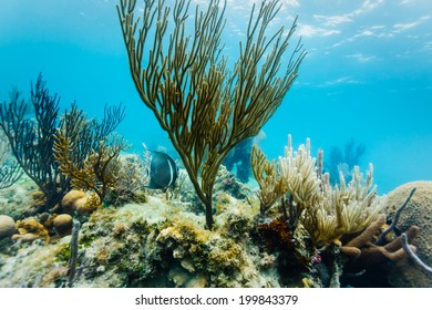 Underwater close up view of marine life and coral formations on Coral reef off eastern coast of Belize