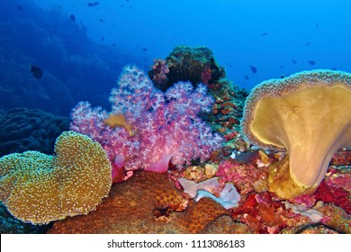 Underwater colorful coral reef with variety of wildlife. Tropical sea and aquatic life. Scuba diving on the coral reef.