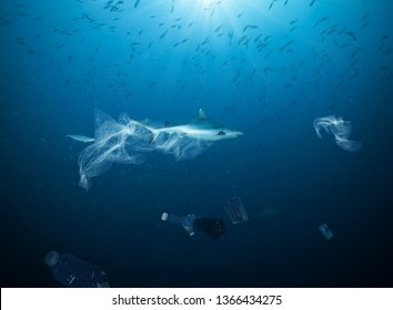 Underwater concept of global problem with plastic rubbish floating in the oceans. Shark in caption of plastic bag