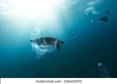 Underwater concept of global problem with plastic rubbish floating in the oceans. Hawksbill turtle in caption of plastic bag