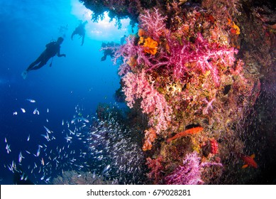 Underwater coral with bright color fish. There is a diver in the background, Similan, North Andaman Sea, Thailand.