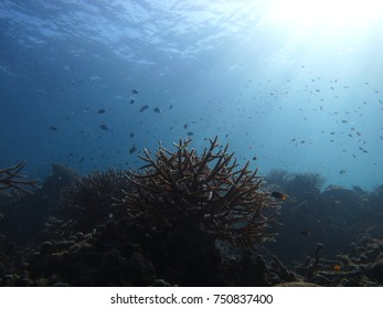 Underwater coral community in sunlight.